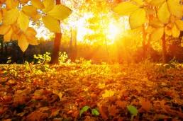 beyond autumn garden must haves