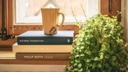 Cup next to a house plant - Home tips - Beyond Storage
