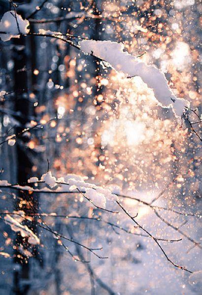Winter Hereford
