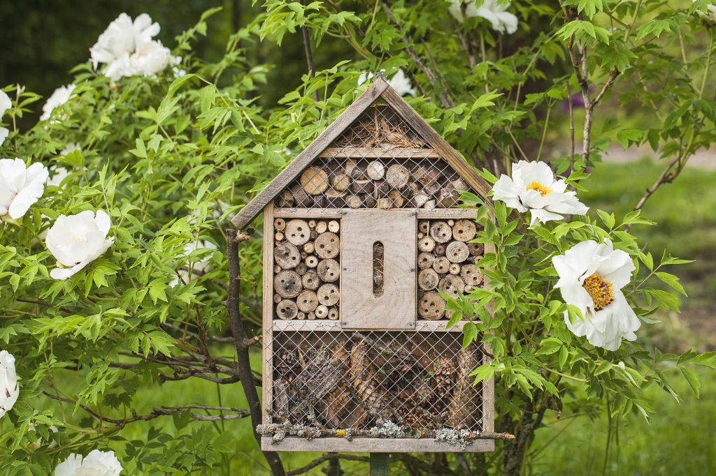 Insect house bee house