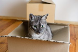 moving with cats and dogs, packing