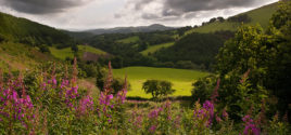 The Green Pages: Top 10 Things to Do in Carmarthen